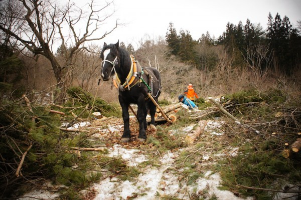 The horse logger