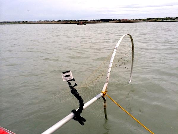 clamp-fishing