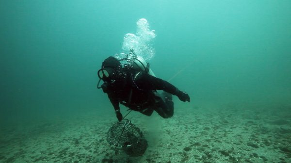Scallop Diver James Sewell underwater