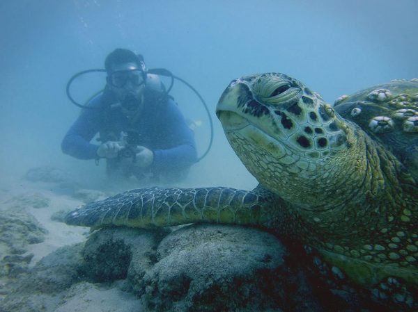 Justin Grubb gets up close and personal to an endangered green sea turtle, off the coast of Hawaii.