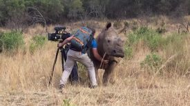 Filming Up Close And Personal With A Rhino